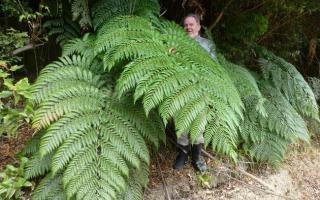 lophosoria quadripinnata monnet gardenstudio progetti terrazzi giardini