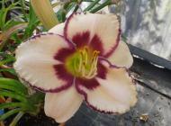 Immagine principale pianta